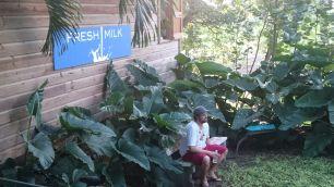 Danilo Oliveira at Fresh Milk