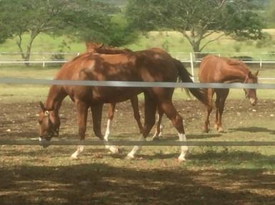 Horses around the Fresh Milk residency flat