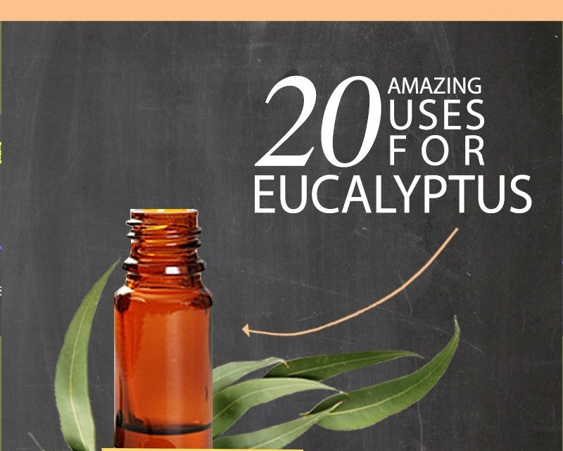 20 easy and practical uses for Eucalyptus essential oil in everyday life!