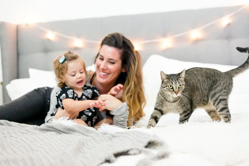 5 tips for the best baby and pet photos!! Plus, a SUPER simple DIY cat toy that your toddler with LOVE!