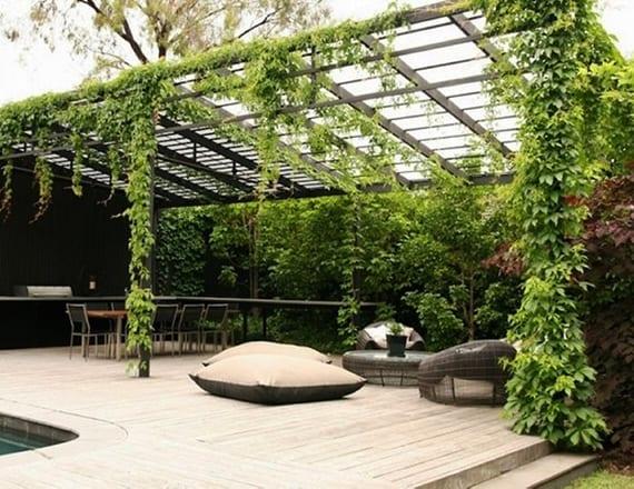 10 Kletterpflanzen Für Pergola: Traumhafte Sitzplätze Im