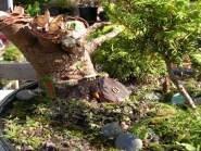 Fairy Garden Ideas Landscaping