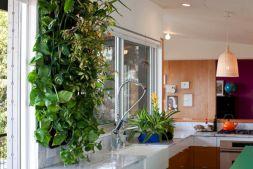 Indoor Living Wall