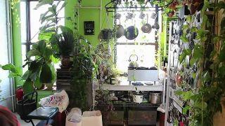 Indoors Vertical Gardens