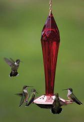 Hummingbird Bird Feeder