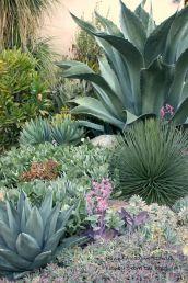Outdoor Succulent Garden Ideas 7