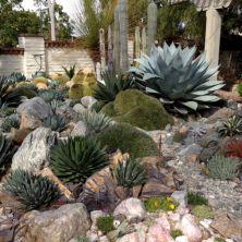 Outdoor Succulent Plant Garden 8