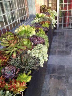 Outdoor Succulent Plant Garden 9