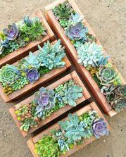 Small Succulent Container Garden Ideas 10