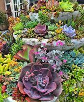 Small Succulent Container Garden Ideas 12