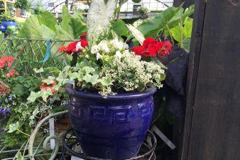 Beautiful Container Garden Plants