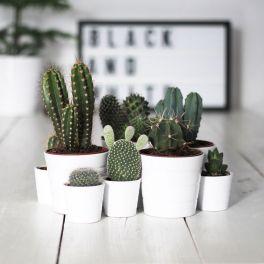 Cactus Home Decor Ideas 12