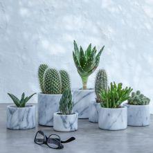 Cactus Home Decor Ideas 21