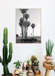 Cactus Home Decor Ideas 27