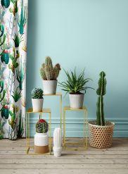 Cactus Home Decor Ideas 5