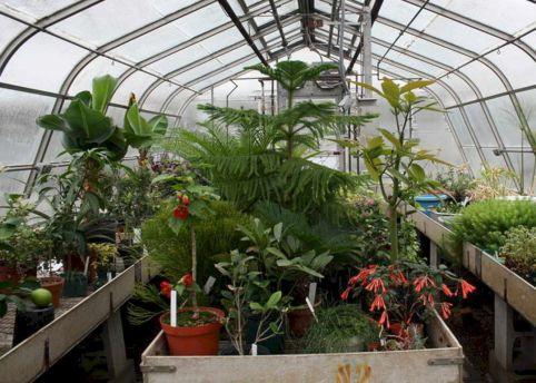 Greenhouse Plants