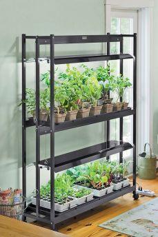 Growing Plants Indoors Grow Lights