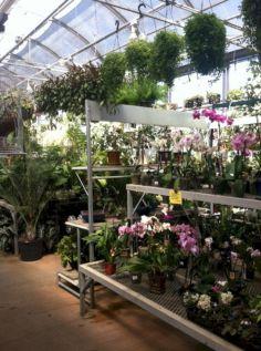 Indoor Orchid Greenhouse