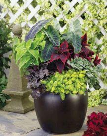 Plant Container Garden Combination