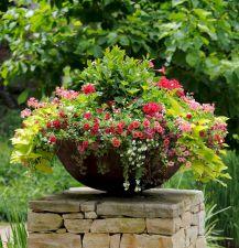 Plant Container Garden Ideas