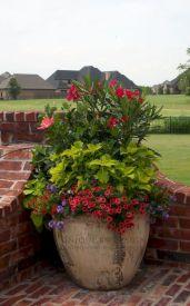 Pot Container Garden Plants