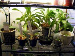 Small Indoor Greenhouse