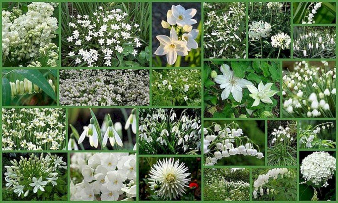 All White Flower Garden Ideas