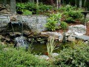 Feature Water Backyard Ponds