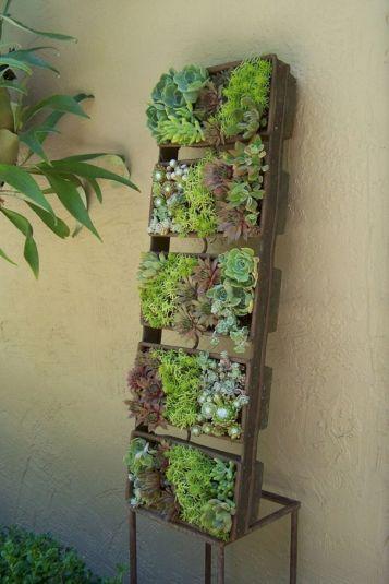 Vertical Succulent Wall Planter