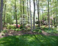 Wooded Back Yard Landscape Ideas