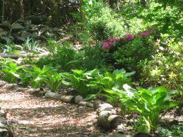 Woodland Garden Ideas