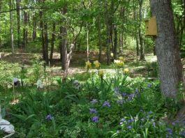 Woodland Garden Landscape Design Ideas