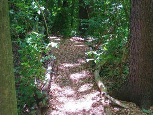 Woodland Shade Garden Designs