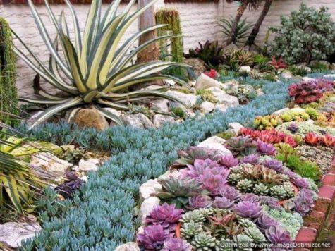 Garden Succulent Ideas 1