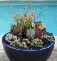 Garden Succulent Ideas 10