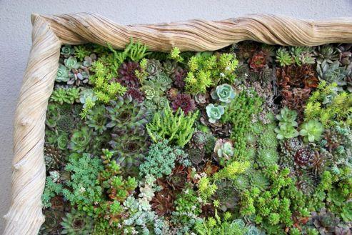 Garden Succulent Ideas 16