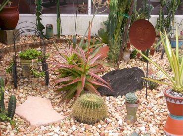Garden Succulent Ideas 18