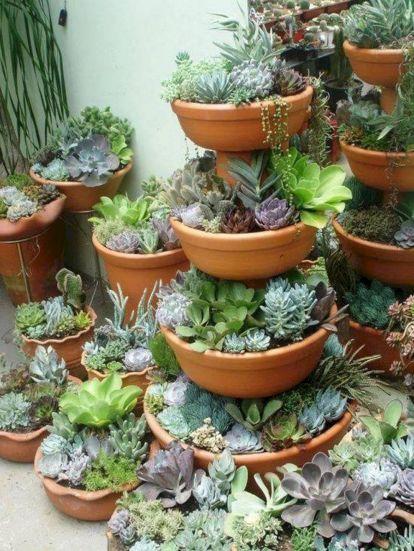 Garden Succulent Ideas 22