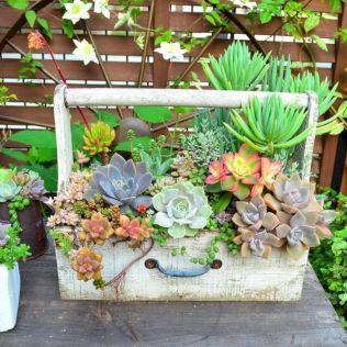 Garden Succulent Ideas 23