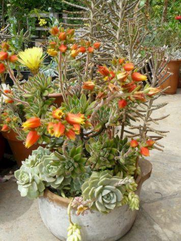 Garden Succulent Ideas 6