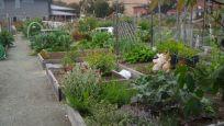 Community Garden Ideas For Inspiration 19