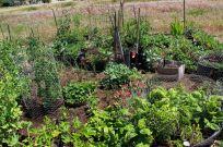 Community Garden Ideas For Inspiration 2