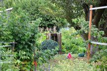 Community Garden Ideas For Inspiration 7