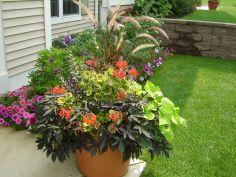 Container Gardening Ideas 10