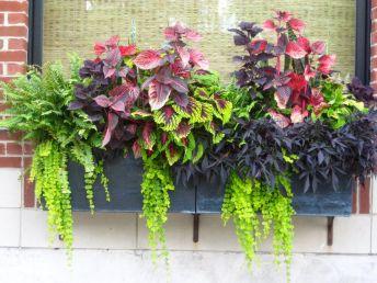 Container Gardening Ideas 13