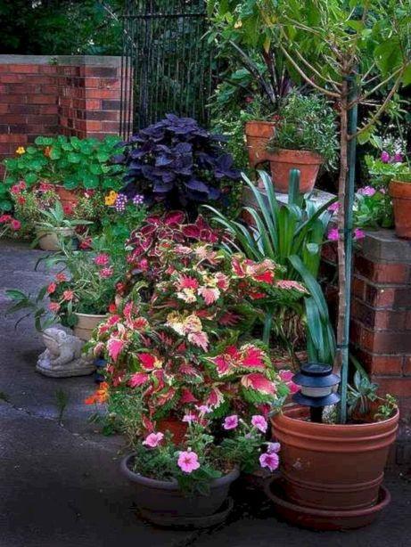 Container Gardening Ideas 26