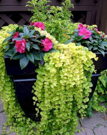 Container Gardening Ideas 27
