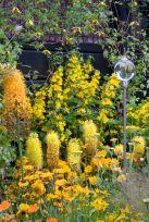 Orange Garden Color Inspiration 12