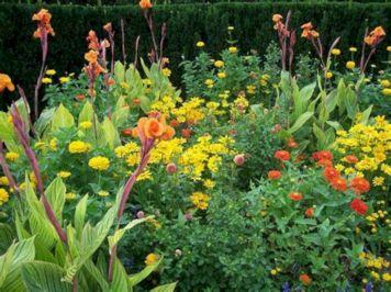 Orange Garden Color Inspiration 2