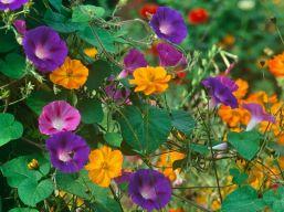 Orange Garden Color Inspiration 5